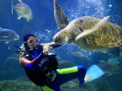 武汉东湖海洋世界海豚表演时间 图片合集